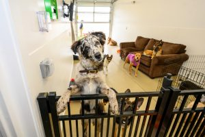 Pets a Go Go Stamford Celebrates Grand Opening